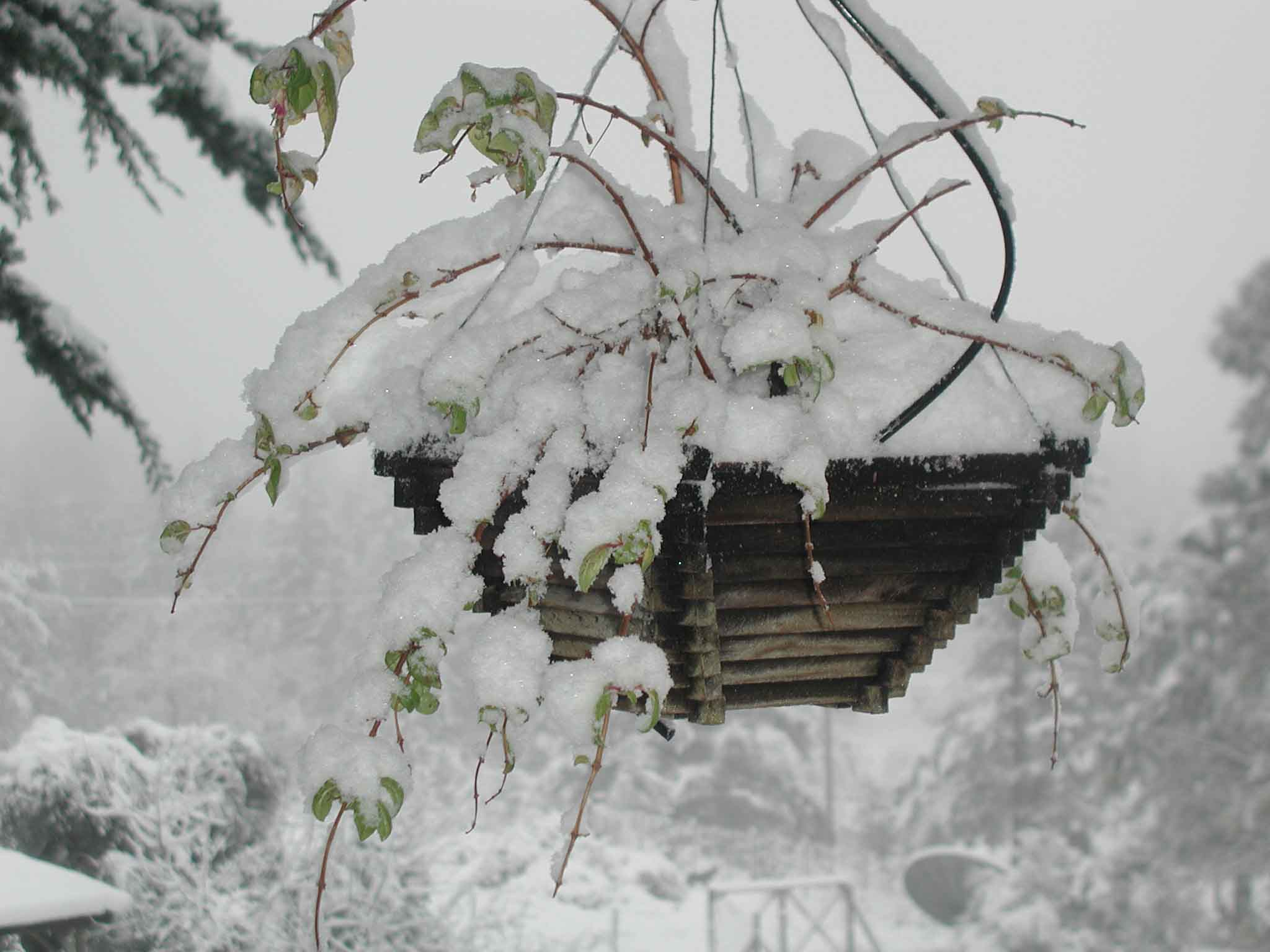 Snow on the Flower Box